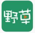 野草视频app官方版